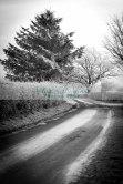Willingham Woods-2